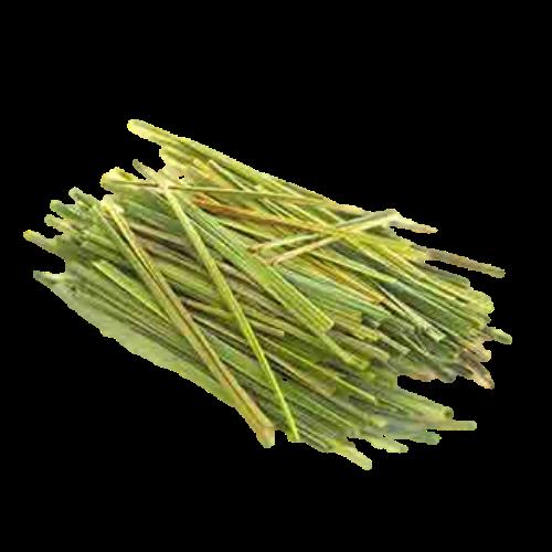 Citronella (Cymbopogon winterus)