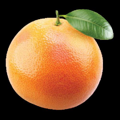 Grapefruit (Citrus X paradisi)