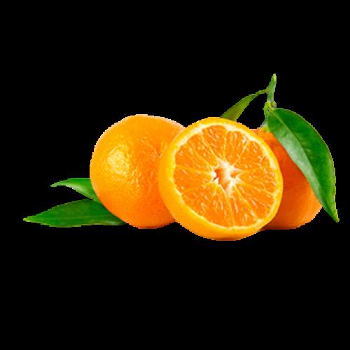 Orange (Citrus sinensis)