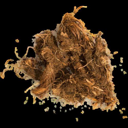 Spikenard (Nardostachys jatamansi)