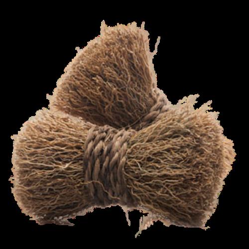Vetiver (Vetiveria zizanioides)